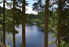 Kielder Forest, Northumberland, UK