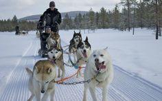 Dog sledding in Iso Syote, Finland