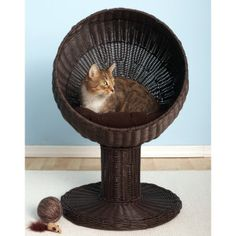 The Refined Feline Kitty Ball Bed | Beds | PetSmart