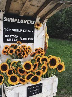 Ideas for flowers photography wallpaper summer sun