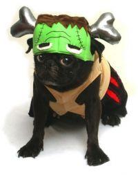 Barkenstein Dog Costume  sc 1 st  Pinterest & dr. seuss dog costume | Sturdy Boy | Pinterest | Dog Pet costumes ...
