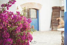 Fotógrafo: Katia Dasí Horchata, Plants, El Paso, Doors, Traditional Homes, Flooring, Tiles, Courtyards, Planters