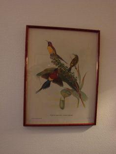 lithographie d'oiseaux encadrée par CuriositesdeSophie