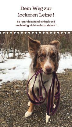 Keep it easy - the leash - Hundetraining - Dogs Cute Funny Dogs, Warrior Cats, Diy Stuffed Animals, New Adventures, Dog Leash, All Dogs, Dog Treats, Dog Love, Dog Training