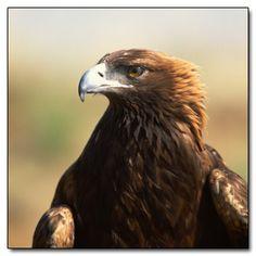 The 6 Most Disturbingly Evil Birds
