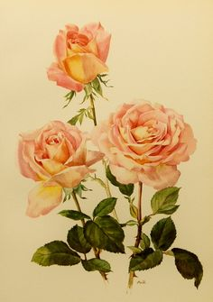1960s Confidence Rose Flower Print (Pink Rose Shabby Chic Home Decor) Vintage Botanical Illustration (Antique Art Book Plate No. 59)