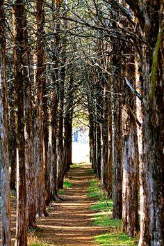 Exiting Parallel Forest-Wichita Mountain Wildlife Refuge, Lawton, OK