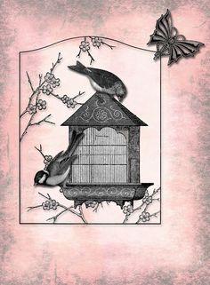 Pássaros e fundo da borboleta