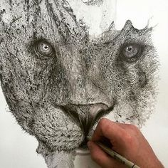 Beautiful #ink splatter #illustrations take you into the wild. Read the story on our website! #illustration #art #artist