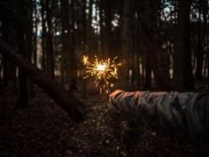 A guiding light in the forrest, by Jamie Street | Unsplash