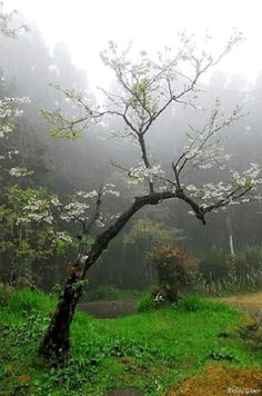Image de nature, tree, and flowers Beautiful World, Beautiful Places, Beautiful Pictures, Mother Earth, Mother Nature, I Love Rain, All Nature, Nature Tree, Rainy Days