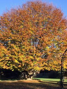 Beautiful fall garden in PA