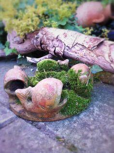 Schoonheidje in m'n tuin / little beauty in my garden