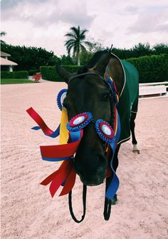 """Another great little show on Marvellous! She was so super! in the – Art Of Equitation Cute Horses, Pretty Horses, Horse Love, Horse Girl, Beautiful Horses, Types Of Horses, English Riding, Equestrian Outfits, Equestrian Quotes"