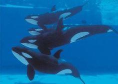 Blog de angelfive - Page 5 - Pour l'amour des orques - Skyrock.com