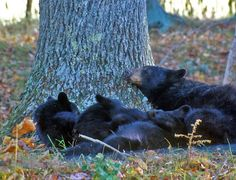 Friends of #Great #Smoky #Mountains National Park