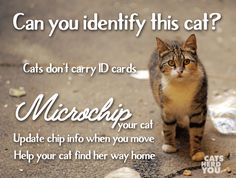 Can you Identify this Cat? Pet ID Week is this week.