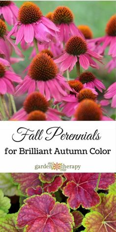 Ideas for perennials to grow in the fall to give the garden some bright color!