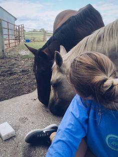 - Art Of Equitation Cute Horses, Pretty Horses, Horse Love, Beautiful Horses, Cute Horse Pictures, Horse Photos, Horse Girl Photography, Equine Photography, Arte Equina