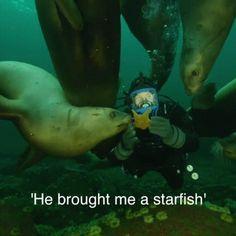 Sea Lion brings scuba diver a Starfish Click here for more adorable animal pics!