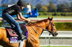Wise Dan Prepares for Breeders' Cup Mile Defense - Past the Grandstand - Horse Racing Nation