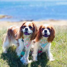 Singapore | Dog Harness | Personalized Dog Bandana | Custom Bowtie Custom Dog Tags, Dog Bandana, Dog Bowtie, Dog Harness, Dog Accessories, Cute Dogs, Singapore, French Bulldog, Dog Cat