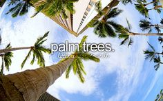 that moment when you land in a warm place and see the first palm tree