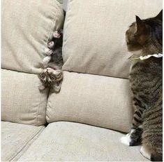 Funny cat meme pictures