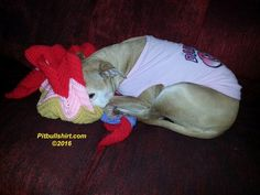 Our Peanut the Pitbull seems to be enjoying her blanket...as a dog snout-warmer. :) www.pitbullshirt.com