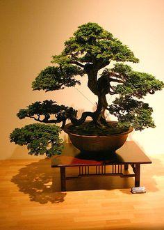 Le bonsaï : Des styles très codifiés