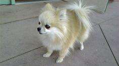 大多的狗狗都是還小就被買回家,但幼犬的照顧又比成犬更需要注意,除了牠們抵抗力較低,容易被感染外,在飲食方面也跟成犬有些許不同的地方,而且對新環境也要適應期,因此主人要更有耐心去照顧牠們唷!  http://petbird.tw/article9385.html