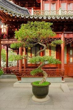 """Penjing (盆景 literally """"tray scenery""""), tray landscape, potted scenery, potted landscape, or miniature trees and rockery, is the ancient Chinese art of depicting artistically formed trees, other plants, and landscapes in miniature.   Yuyuan Gardens, Shanghai, China"""