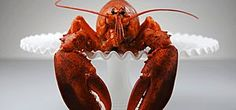 AccuWeather.com - Outdoor - Maine Lobster Industry in Hot Water