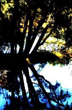 El río copia las imágenes y las repite mil veces para nuestro regocijo.