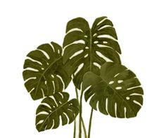 // Free PNG tree cutout.