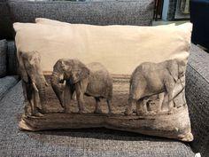 Elephant, Cushions, Throw Pillows, Autumn, Blanket, Winter, Fall, Cushion, Elephants