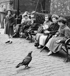 """May 23, 1956 """"One of the seven ravens at the Tower of London receives tidbits from visitors. Tradition says that if the ravens leave the tower, then the British Empire will cease to be."""" - Photo/Caption by getty images"""