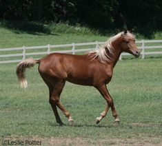 Young horses are at higher risk for equine infectious upper respiratory disease.