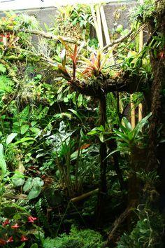 my large mixed viv thread Tree Frog Terrarium, Gecko Terrarium, Aquarium Terrarium, Reptile Terrarium, Terrarium Plants, Chameleon Enclosure, Reptile Enclosure, Crested Gecko Vivarium, Tropical Terrariums