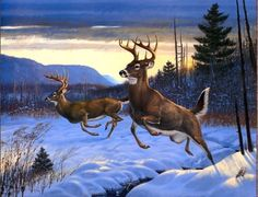 HD prints oil painting on canvas Materials/Milieu: HD-Prints oil painting on canvas Painting Size (inch) : or tell me , you l. Wildlife Paintings, Wildlife Art, Animal Paintings, Deer Paintings, Whitetail Deer Pictures, Deer Photos, Deer Drawing, Hunting Art, Deer Art