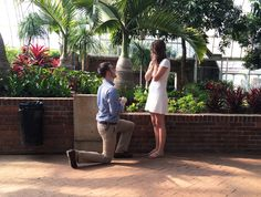 Our Proposal at @phippsisgreen: read the story!