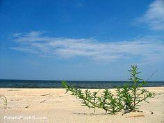 Baltic Sea - sunny beach in Poland.