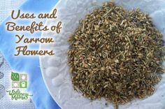 Herb Profile: Yarrow-Natural and Herbal Uses