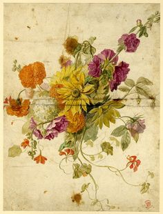 Watercolours by Jan van Huysum (1697-1749) Flower studies The British Museum See the colectionhere