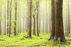 Forest in spring Wall Mural