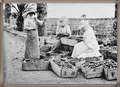 La Palma - Valle de Aridane año 1940...  #canariasantigua #blancoynegro #fotosdelpasado #fotosdelrecuerdo #recuerdosdelpasado #fotosdecanariasantigua #islascanarias #tenerifesenderos