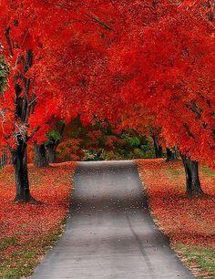 MY PHOTO: Autumn and fall colors   Salamander Resort & Spa   Middleburg, Va.