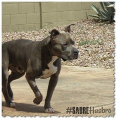 Sabre is at attention. #sabrehasbro