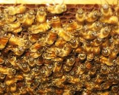 How to prepare for bee keeping | Homestead Lady