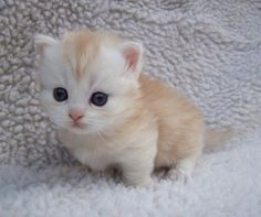 Cuteness overload ! Such a tiny kitten getting a look at a very big world.